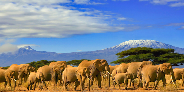 Savings in Tanzania & South Africa with African Travel