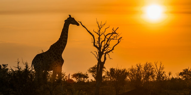 Save 10% on Africa Destinations with African Travel