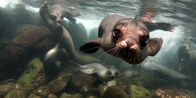 Free Roundtrip Economy Class Air on Select Galapagos Sailings with Lindblad Expeditions