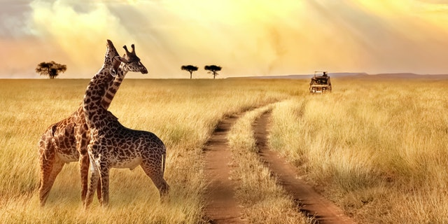 Save $1,000 with African Travel