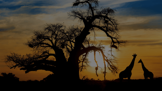 Journey Through Africa and India in Style - Micato Safaris